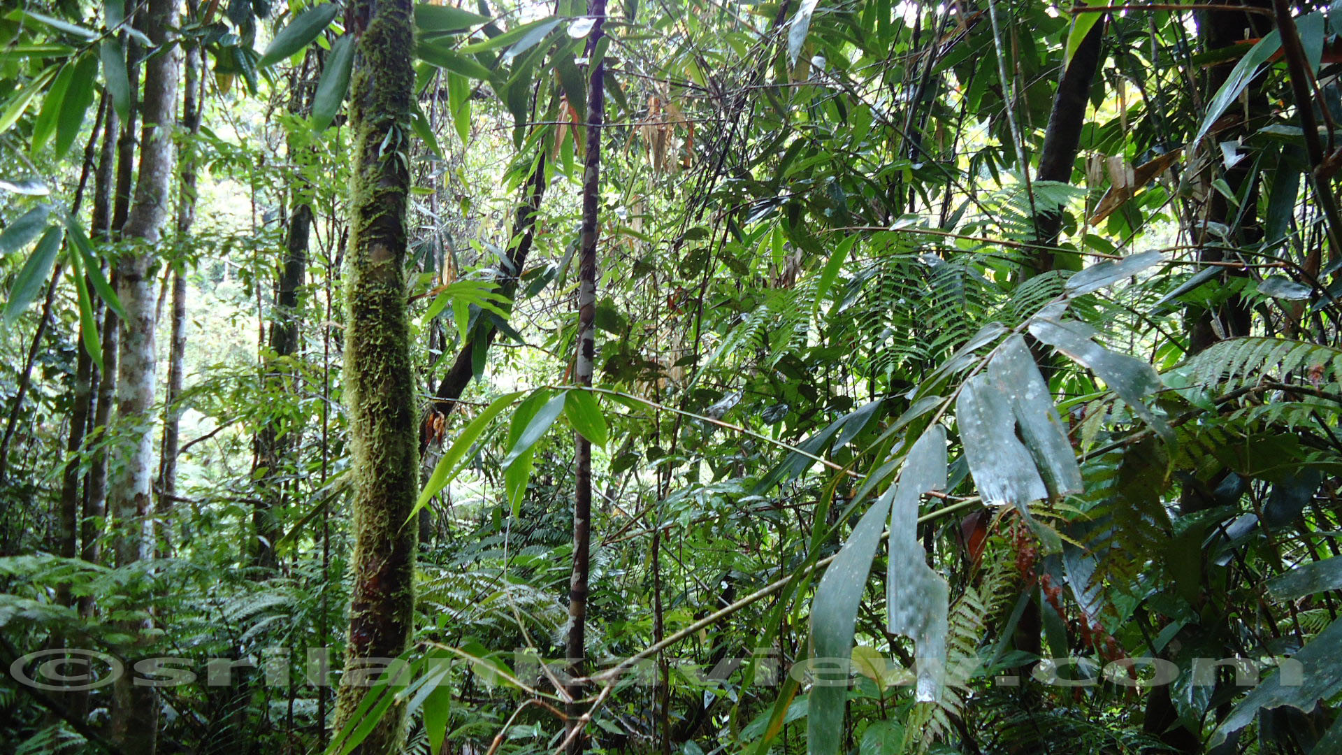 the survival of the rainforests depends on human compassion You hear so much about saving the whales and the rainforests,  the urban wildlife society has never sought nor received funding, and their survival depends upon it.