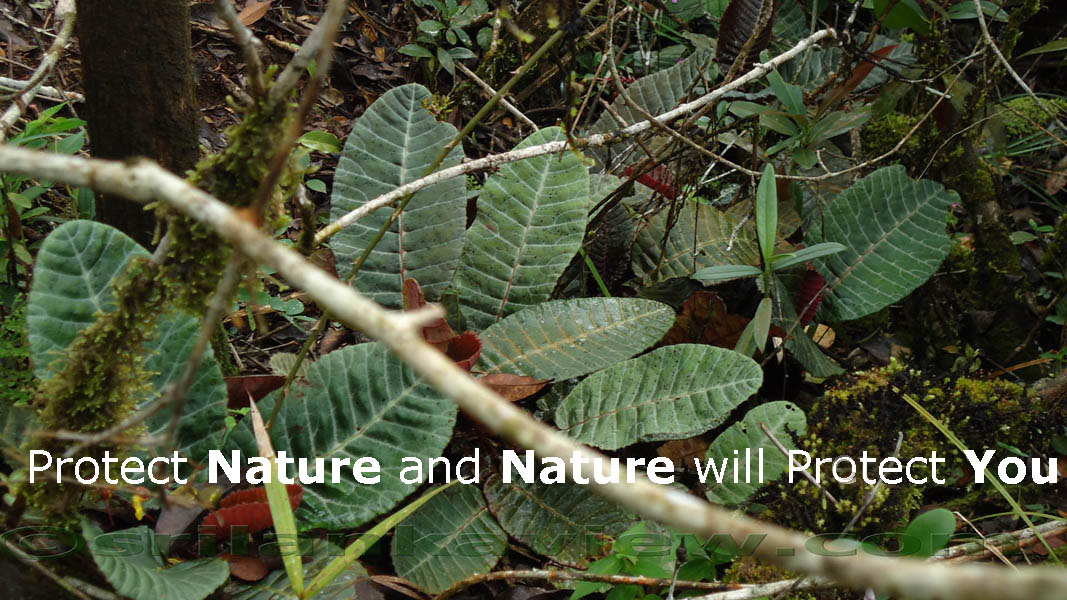 Save The Nature Logo Collection And Quotes Srilankaview
