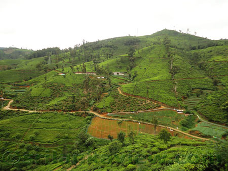 Scenery from Nuwara Eliya- Udupussellawa Road