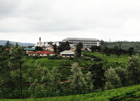 A Tea Factory at Nuwara Eliya