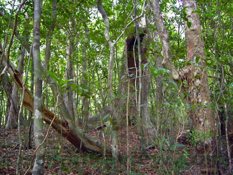 essay on tree