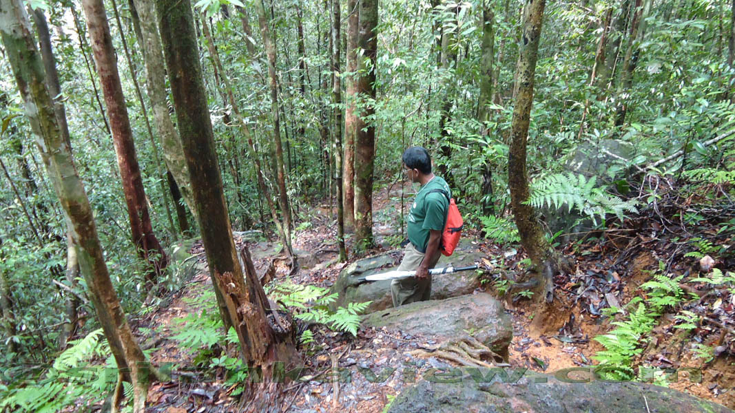 sinharaja rainforest essay Located adjoining sinharaja rain forest this is an ideal place to stay a night sinharaja rain forest tours are easy while staying in sinharaja forest edge a budget.
