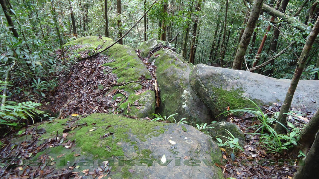 sinharaja rain forest essay Travel agent/tour operator-service provider for nature/adventure related  activities in sri lanka-asia all our tours and activities are conducted in  compliance.