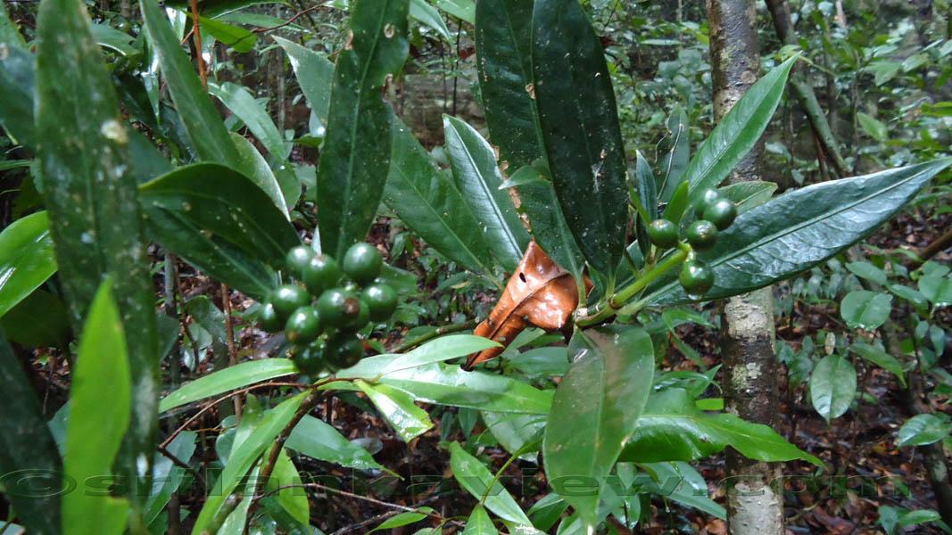 essay about sinharaja rain forest
