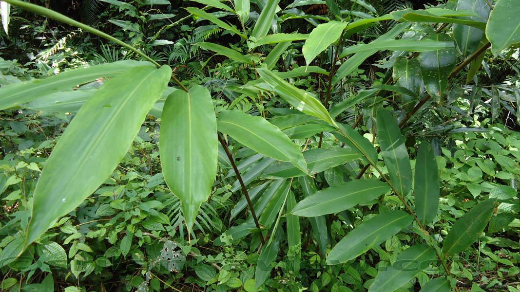 sinharaja forest in sri lanka essay