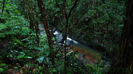 Sinharaja Rain Forest Water Stream